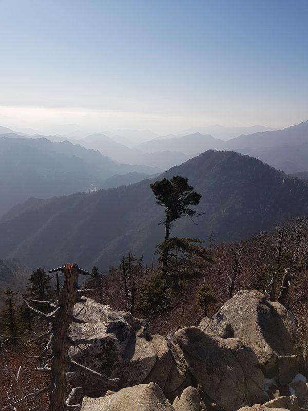 돌과 나무가 가까이에있고 멀리 펼쳐진 산맥